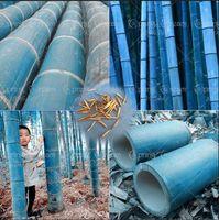 Wholesale Herb Planters - 500pcs Rare Blue Bamboo Seeds Decorative Garden Herb Planter Bambu Tree Phyllostachys Heterocycla Seeds For Diy Home Garden