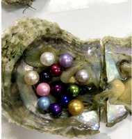 Wholesale Blue Akoya Pearls - 2017 new Round 5-7mm Colors seawater natural Akoya Pearl Oysters Cultured in Fresh Oyster Pearl Mussel Farm Supply Free Shipping wholesale