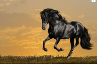 black fashion museum - Framed Jet Black Horse Running in a Meadow Genuine Hand Painted Animal Art oil Painting On Thick Canvas Museum Quality Multi sizes HS008