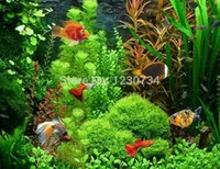 Wholesale aquatic seeds - 22 Varities Mix Package ,20g ,Waterweeds Seeds ,Aquarium Grass Seeds ,Aquatic Plant Seeds ,High Survival Rate Top Quality W52