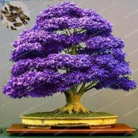 Wholesale Cheap Wholesale Bonsai - 100% True Japanese Purple Maple Bonsai Tree Cheap Seeds, 20 Seeds   Pack, Very Beautiful Rare Bonsai Plants Tree Free Shipping