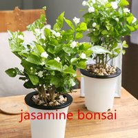 Wholesale White Jasmine Flowers - Jasmine Seeds Promotion Balcony Bonsai Flower Seeds Flowering Plants White Jasmine 20pcs Easy to grow T024