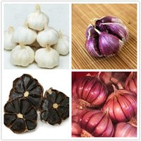 Vagetable Seeds organic fast food - fast shipping rare mixed COLORS Multi petals garlic seeds Organic seeds vegetables Kitchen seasoning food bonsai or pot plant home garden