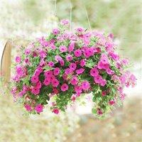 ingrosso semi di gloria-300 PZ Semi di Petunia, Petunia Gybrida, Giardino domestico Bonsai Balcone Fiore Morning Glory Seeds Piante da giardino