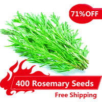 ingrosso coltivi i semi di verdure-400 semi di rosmarino pianta da giardino fai da te facile da coltivare erba, semi di ortaggi sani,