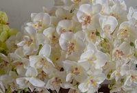 ingrosso le clip di capelli dell'orchidea matrimoni-Phalaenopsis Orchid Silk Heads Heads - 4.8