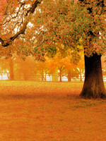 fondo de tela de vinilo al por mayor-Caída fotografía escénica telón de fondo tela de vinilo árbol grande hojas de naranja piso otoño fondo telones de fondo de boda al aire libre 8x10ft