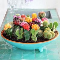 ingrosso semi ornamentali-Multifarious piante ornamentali 100 Mixed Cactus Seeds attraente impressionante MARSEED 100% NATURALE casa giardino Bonsai Sementi