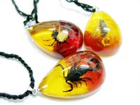 Wholesale Colorful Resin Necklace - free shipping yqtdmy 12 pendant embedded spider scorpion colorful drop fashion Keepsake Pendant