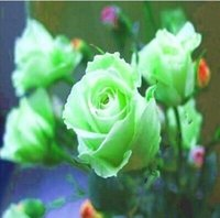 Wholesale Green Rose Seeds Balcony Potted Barrier seeds Bonsai Flowers seeds Garden Plants per pack
