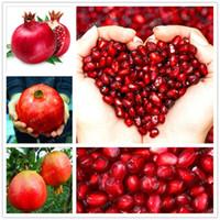 ingrosso organic fruit-Organic 20 Turchia Gigante semi di Melograno Punica Granatum Arbusto Albero da Frutto RARE Semi di Melograno Per La Casa Giardino Semi di Piante