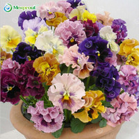 blumensamen stiefmütterchen großhandel-100 samen / pack schöne stiefmütterchen Samen Mix Farbe Wellenförmige Viola Tricolor Blumensamen bonsai topf DIY heimgarten Kostenloser versand