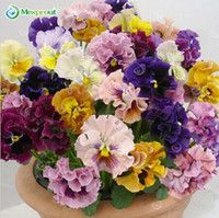 Wholesale common potted flowers resale online - 100seeds pack beautiful pansy seeds Mix Color Wavy Viola Tricolor Flower Seeds bonsai potted DIY home garden