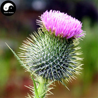 blessed herbs - Buy Milk Thistle Seeds Plant Herb Blessed Thistle Grow Holy Thistle Silybum Marianum