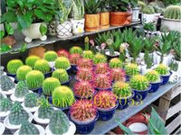 Wholesale 20pcs easy to grow a of seeds of cactus succulents absorb formaldehyde in the beautiful potted plant office bedroom anti radiation puri