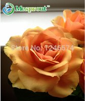 Wholesale Orange Rose Seeds - Rose flower seeds RARE(100pcs) Orange rose seeds   Really Gorgeous! Free shipping !
