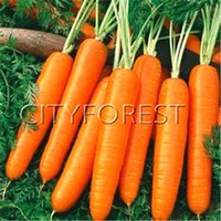 Wholesale Winter Seeds - Carrot Vegetable Seeds 500 Pcs   Bag Heirloom Easy Home-grown Vegetable Seed for Hardy Autumn Winter Popular Cooking Vegetable