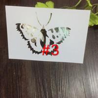 kelebek şablonlar toptan satış-Ucuz beyaz DIY böcek şablonlar Scrapbooking Için Maskeleme şablonu, kart yapımı, boyama, DIY kartları, duvar-kelebek 400a