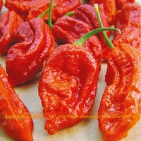 Wholesale Red Hot Chili Peppers - 50 Seeds Pack, Red Ghost Pepper Bhut Jolokia EXTREME HOT Chili Heirloom WORLD RECORD