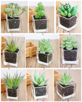 Wholesale 8PCS MOQ Glass and Plastic PVC Emulational Succulents Plants Gardens Used In Home Desk or Table and Wedding Table or Hallowmas