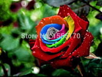 Wholesale Rose Bushes - wholesale200 Stratisfied Mystic Rainbow Rose Bush Flower Seedsplant bonsai