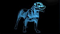 LS1786-b-Rottweiler-Dog-Pet-Shop-Affichage-Neon-Light-Sign.jpg