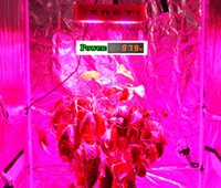 36X3W Led Grow Light 8 Band Multi Color Full Spectrum COB Led Grow Light 100W LED Grow Light Chip, Cor completa 400-840nm, Epileds Brand