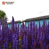 Wholesale Imported Flowers - 100pcs bag Imported Provence Long String Deep Purple Lavender Seeds Lavandula angustifolia Flower Seeds Bonsai Potted Plants