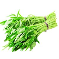 Wholesale Grow Vegetable Seeds - Hot sale 30 grains   bag of vegetable seed mini water spinach seeds are easy to grow Home Furnishing healthy organic vegetables spinach see