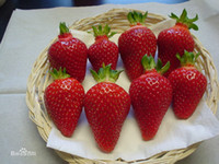 Wholesale Giant Fruit Seeds - Red giant Climbing Strawberry Seeds Fruit Seeds For Home & Garden DIY rare seeds for bonsai 200seeds lot