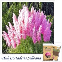 Wholesale Grass seeds Impressive PINK PAMPAS GRASS Cortaderia Selloana Seeds Garden decoration DIY