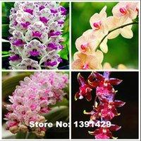 Wholesale Garden Sets Sale - 2000PCS 4pcs  set Hot Sale!!! 10 colors Rare Cymbidium orchid, African Cymbidiums seeds, bonsai flower seeds, plant for home garden