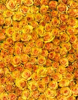 Wholesale Romance Flowers - 5x7ft Vinyl Digital Yellow Flower Rose Romance Photography Studio Backdrop Background