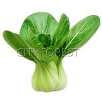 Wholesale Growing Herb Gardens - 1000 Shanghai Bok Choy Seeds Chinese Cabbage NON-GMO Heirloom Vegetable Productive Easy-growing Popular DIY Home Garden Plant Crisp Yummy