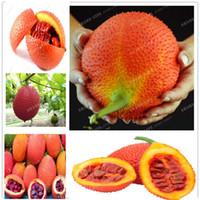 ingrosso sementi di zucche-Nuovi 10 semi / sacchetto Gac Semi di frutta Momordica Cochinchinensis Spreng / Cochinchin Zucca Non OGM Semi di frutta Pianta per la casa Frutta