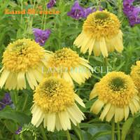 büyük çiçek tohumları toptan satış-Parlak Sarı Ekinezya purpurea (Coneflower) Çiçek Tohum, 50 Tohumlar, Büyük Çift Blooms