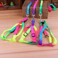 Atacado- prativerdi 1 PCS Cor do arco-íris ajustável Pet Dog Leash Pequeno Filhote de cachorro Gato Rabbit Kitten Nylon Leash Harness Collar Lead