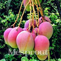 çok nadir bulunan tohumlar toptan satış-2 ADET Nadir Mango Tohum Çok Lezzetli Meyve Tohum Ev Bahçe Ücretsiz Nakliye Için Çok Kolay Büyütün