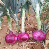 Wholesale Onions Seeds - Purple Onion Vegetable 100 Seeds NON-GMO Easy-growing Home Garden Seeds for Planting High Yield Good Flavor used as Salad
