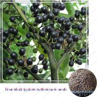 Goji Berries Seeds Canada Best Selling Goji Berries Seeds From