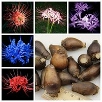 Wholesale Plants Seeds Bulbs - 12 Colors Available Lycoris Species of Fresh Bulbs Garden Plants Potted Bonsai Bana Bulbs -5 pcs