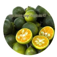 Wholesale citrus seeds - 500pcs a set qingju Mandarin orange Citrus reticulata HOT Seed Rare Seed Hot Seed Great Quality Great Service Great Price