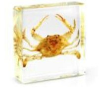 Swing Crab Specimen LearningEducation Brinquedos Acrílico Resina Embedded Animal Transparente Mouse Paperweight Kids Science Kits Crafts Gifts
