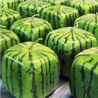 Wholesale Melons Seeds - Home Potted plants Rare Simple Geometric Square Watermelons Seeds Delicious Chinese Fruit Water Melon Seeds free shipping