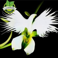 Wholesale Orchid Sales - hot sale ! Beautiful Japanese Radiata Seeds White Egret Orchid Seeds World's Rare Orchid Species Home Flower Plant orchid-seedlings