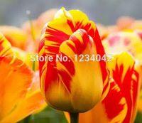 ingrosso piantare piante di tulipani-wholesale200 PC Mix Casuale semi di tulipano pianta di alta qualità, 25 semi di fiori varietà di piante bonsai