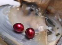 Wholesale Food Christmas Gift - Freshwater Pearls with TWIN AAA Grade 7-8mm Red Rice Freshwater Oyster Surprise Birthday Gifts Vacuumed