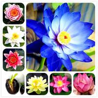 семена лотоса лилии оптовых-1 шт. / пакет Lotus Flower lotus семена водных растений чаша lotus Water Lily семена цветов семена многолетние растения для дома сад