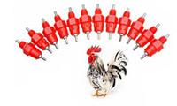 abreuvoirs de poulet achat en gros de-2500 pcs Mamelon Buveur Nourrisseur Tasses D'eau Poulet Buveur Waterer 360 Angle Volaille Fournitures D'arrosage