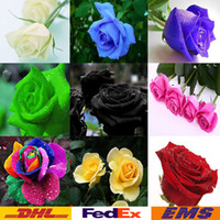 semillas de loto gratis al por mayor-Rose Seeds Envío Gratis Colorido Rainbow Rose Semillas Purple Red Black White Pink Yellow Green Blue Rose Semillas 100pcs / bag WX-P01